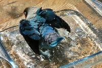 水浴びB.Bの記録 → (blueのハート・8月26日) - FUNKY'S BLUE SKY