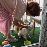朝ごはん後の顔拭き - ぶつぶつ独り言2(うちの猫ら2018)
