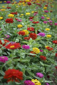 夏の色 - 雅郎の花鳥風月