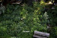 千葉へ! 天王台の「kupu」と流山の森カフェ「ONIWA」 - Camphortreeの日常