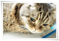 ― 染色月の もの想い ― - 風のうた 猫の呟き