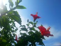 8月も・・・。 - 青い海と空を追いかけて。