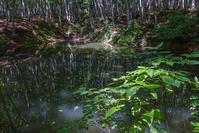 久々に美人林へ - デジカメ写真集
