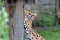 耳が真横 - 動物園へ行こう