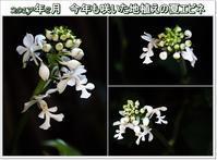 8月に咲いた花 - eekoの自己満足(1)