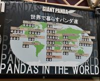2017年8月白浜パンダ見隊その2チーターガイド - ハープの徒然草