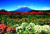 29年8月の富士(8)夏の花と富士 - 富士への散歩道 ~撮影記~
