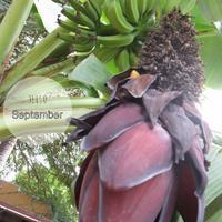 9月 - aloha healing Makanoe