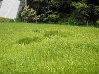 イノシシシーシーあっちいけー - ひろしの「どっこい田んぼのジャージーデー」