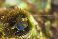 気になる存在 - Diving Life ~Aita pe'a pe'a~