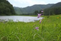 木祖村の野草 その1 - 花鳥風景