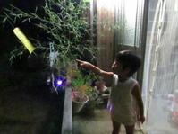 旧暦七夕 - 南阿蘇 手づくり農園 菜の風