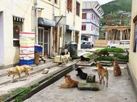 ブータンの犬 - koe&Kyo 日々燦々