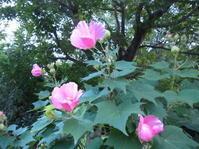 風の盆に思う - 花の自由旋律