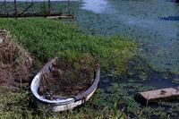 オニバスの池は・・・以下略 - Tom's  OM-D