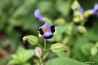 決別のとき - 花の咲み、花のうた、きらめく地上 ―― photo&poem gallery kannon花音