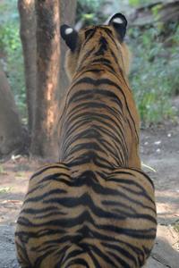 耳カット - 動物園へ行こう