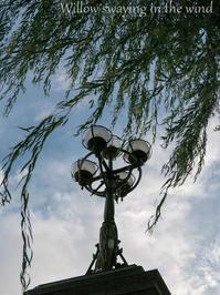 Willow swaying in the wind - 広小路通散歩(旧御堂筋散歩)
