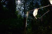 四万十遠征 オニヤンマの産卵 Byヒナ - 仲良し夫婦DE生き物ブログ