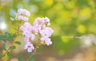 感謝の日 - 花々の記憶
