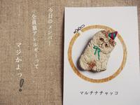 パーリーな猫 - マルチナチャッコ