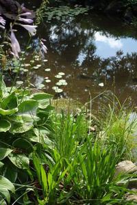 ルサルカ 〜隣の芝生は青かった〜 - 美鈴とトラと私とお庭