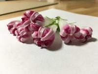 『アサガオ・・いろいろ・・』 - NabeQuest(nabe探求)