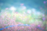 青い虹。 - *ぷるはあと*