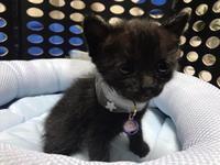 幸せを運ぶ猫【クロネコクレフ】と幸せのしっぽ - 自分を好きになる処方箋