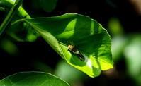 厳しい残暑 - 紀州里山の蝶たち