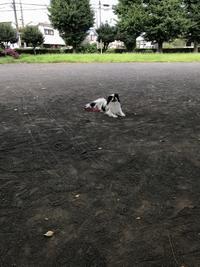 涼しくお散歩できました。 - 白黒きんぎょの3狆ごよみ