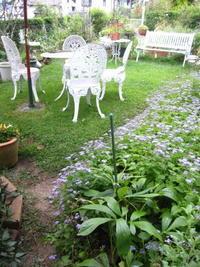 今日も朝から庭仕事 - 花の自由旋律