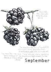9月 ブラックベリーでいっぱいになります - ブルーベルの森-ブログ-英国カントリーサイドのライフスタイルをつたえる