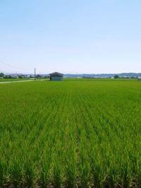 無農薬の『雑穀米』、『発芽玄米』命のみなぎる「美味しいお米」に元気な花が咲きました - FLCパートナーズストア