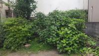 すみれの庭9月の催し - シュタイナー幼稚園  NPO法人すみれの庭