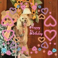 Happy Happy Birthday ♪ 〜 coco 13 years old 〜 - 君の瞳に恋してる♪