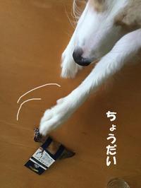 デンタル用 鹿のヒヅメ - ボーダーコリー  レンとの奮闘記