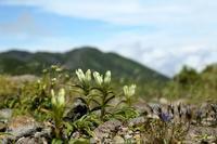 再び乗鞍岳へその1 - 花鳥風景