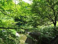 山奥散策 - NATURALLY