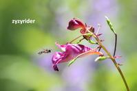 あかい誘惑 - ジージーライダーの自然彩彩