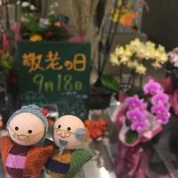 敬老の日 - ~ Flower Shop D.STYLE ~ (新所沢パルコ・Let's館1F)