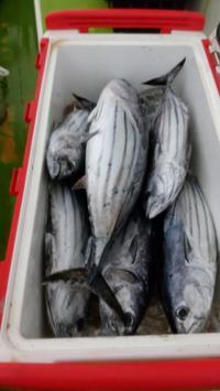相模湾マグロ祭り@葉山港 私は・・・・ - 釣りおやじ