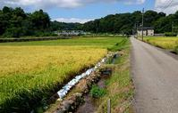 青空と黄金色に導かれて - 金沢犀川温泉 川端の湯宿「滝亭」BLOG