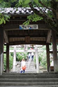 吉備津神社のあじさい アリアドネ - ちょこちょこ4