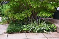 ヤブランに花が咲く - 緑のチョーカー