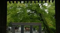 蘆山寺 - belakangan ini