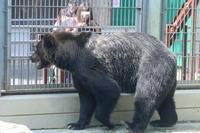 ヒグマにおやつ - 動物園放浪記