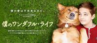 『僕のワンダフル・ライフ』  僕の愛は不死身なのだ。 - Doggie Do!! / good dog and hello cat !!