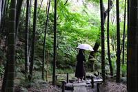 雨の報国寺♯2 - Amour Tendre