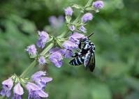いろいろなハチたち - 公園昆虫記
